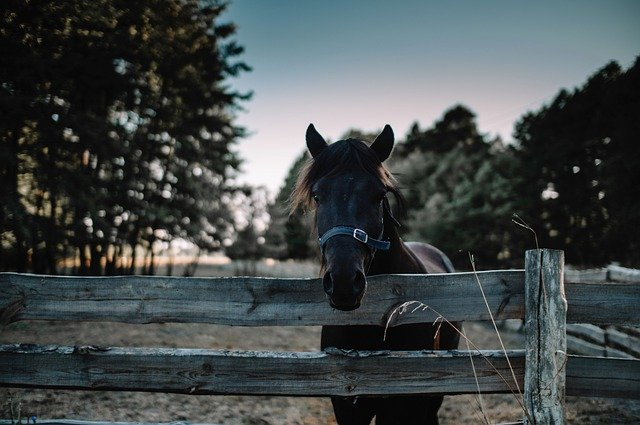 Maatilamatkailu tarjoaa maalaismaiseman ja eläimiä.